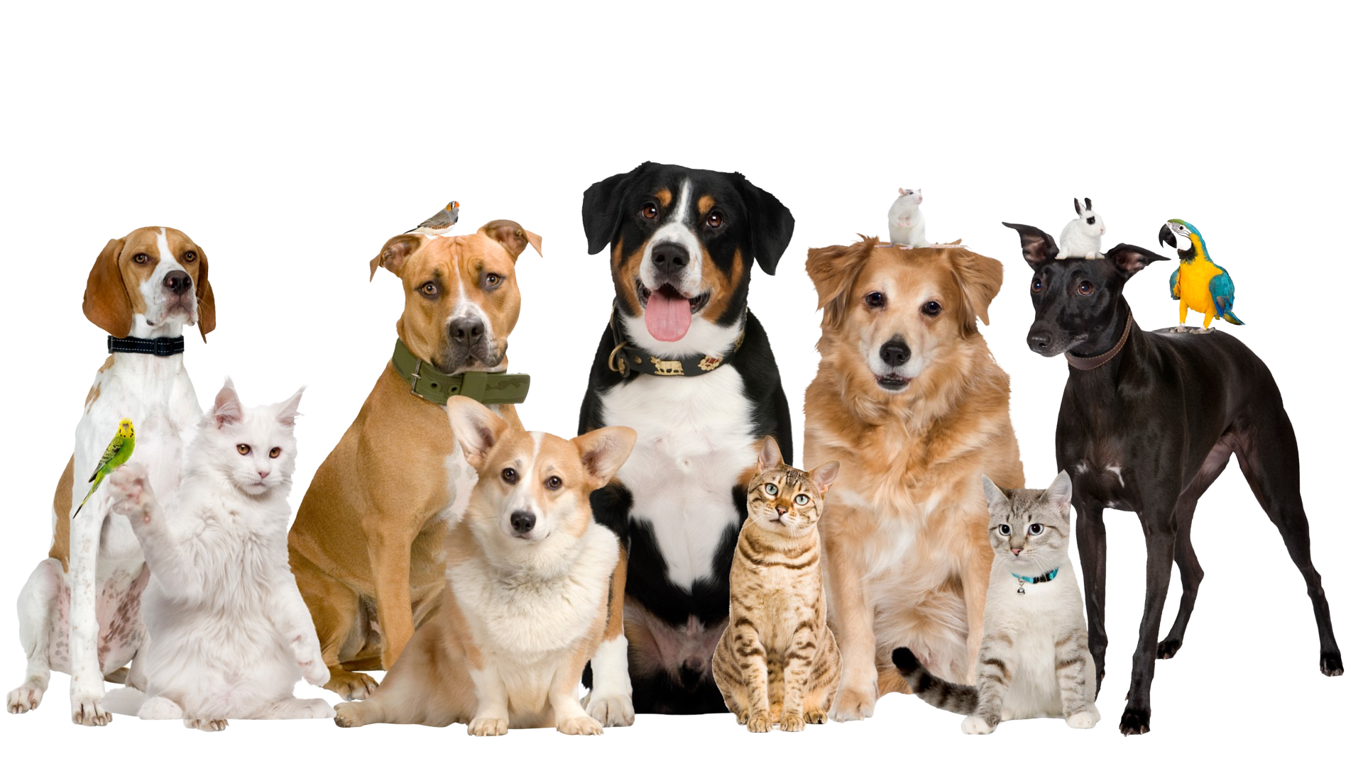 Pet Clinic In Vizag